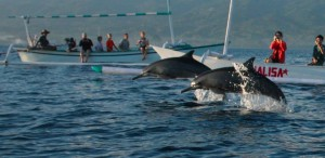 delfiner